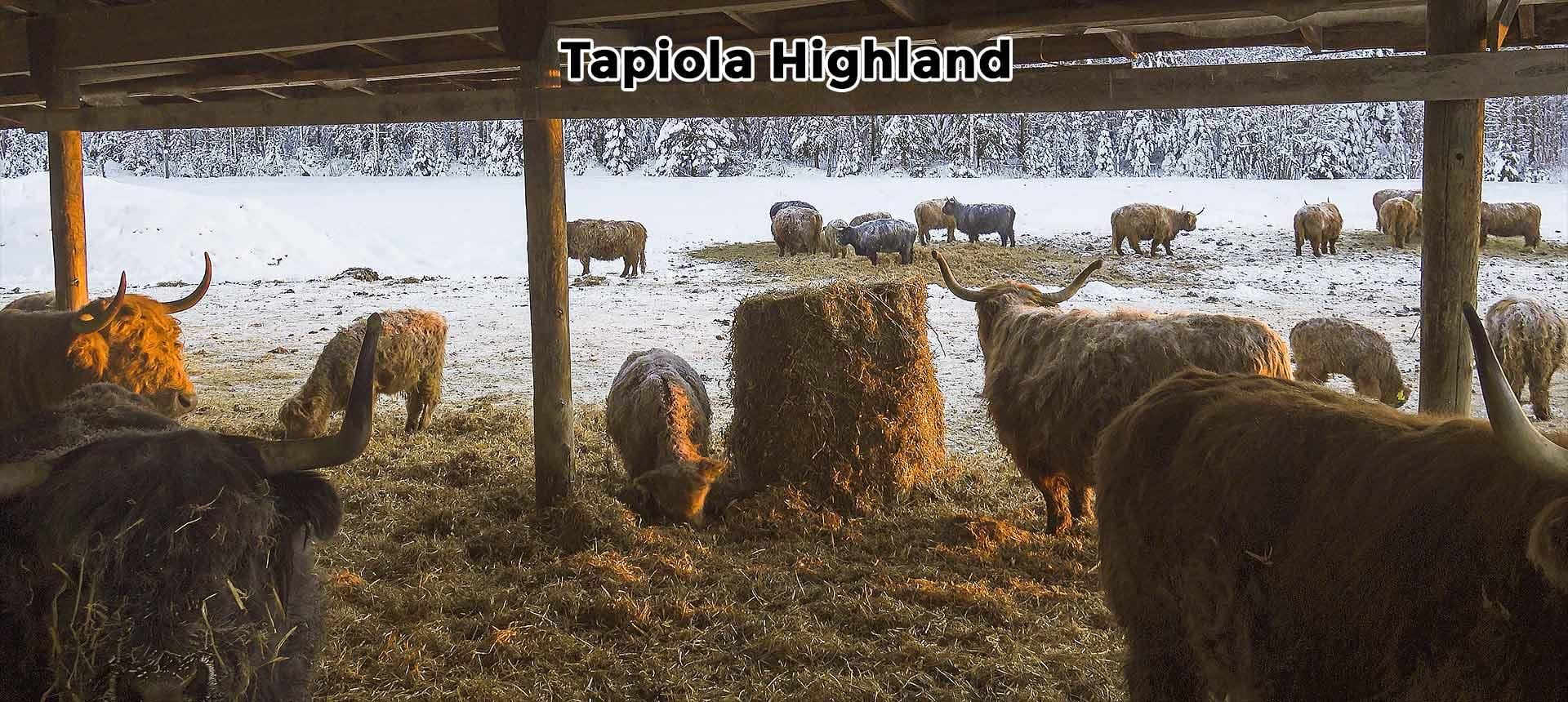 Tapiola Highland
